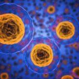 inflamatia acută vs. inflamația cronica